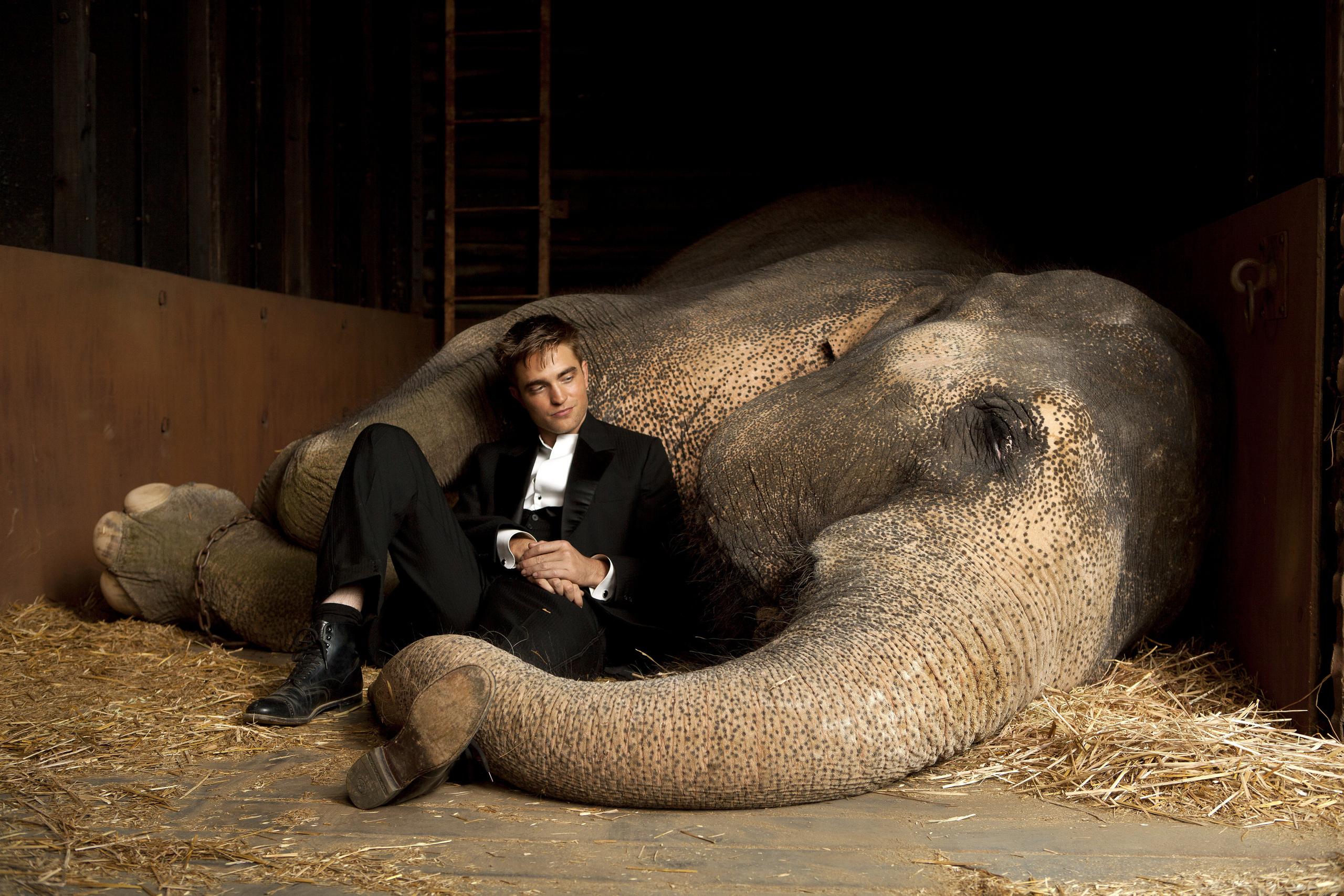 Water for elephants essay